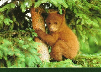 25 Postcards ( OF The Same Design) Postcard Black Bear Cub (Ursu