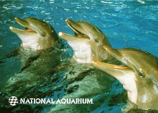 23X Postcard Bottlenose Dolphin (Tursiops trncatus) NATIONAL AQU