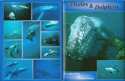 2x Whales & Dolphins, A collection of twelve Prints, Postcard Pa