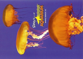 32X Postcard Of Jellyfish Ripley's Aquarium Myrtle Beach SC