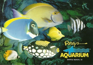 24X Postcard  Colored fish create waves of color Ripley's Aquari