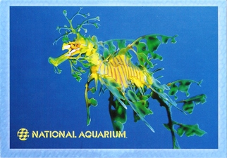 21X Postcard Leafy Seadragon (Phycodurus eques) NATIONAL AQUARIU
