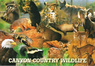 25 Postcards ( OF The Same Design) Postcard of Canyon Country Wi