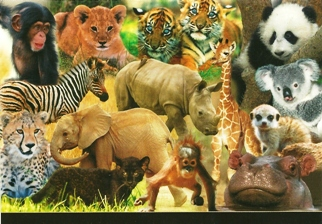 25 Postcards ( OF The Same Design) Postcard of Exotic Wildlife (