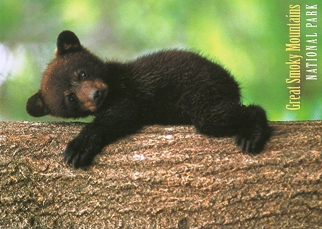 21x Postcard Cub Black bears GREAT SMOKY MOUNTAINS NATIONAL PARK