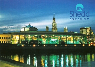 20X Postcard Oceanarium at Night Shedd Aquarium
