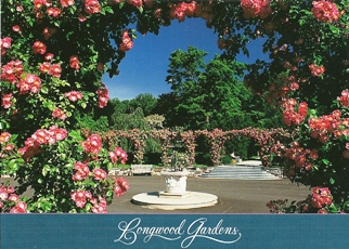 25x Postcard Of Rosa 'American Pillar' blooms Longwood Gardens
