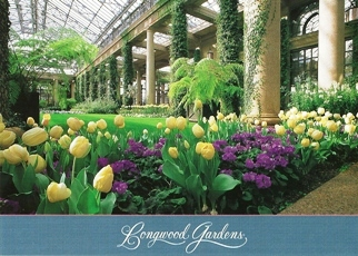 23x Postcard chill, tulips and other spring flowers bloom Longwo