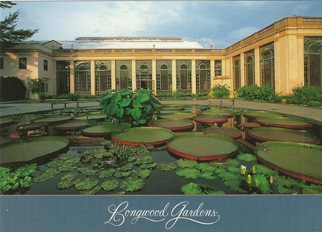 25x Postcard Of water lilies and giant water platters Longwood G