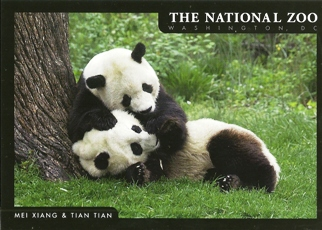 20x Postcard Of GIANT PANDA NATIONAL ZOO , Washington, DC