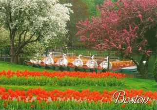 29x Postcard of Swan Boats in Spring BOSTON