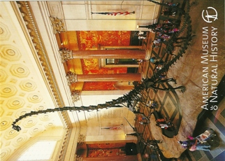 25x Postcard Of Barosaurus American Museum of Natural History.