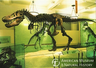 20x Postcard Of Tyrannosaurus rex Skeleton AMERICAN MUSEUM OF NA