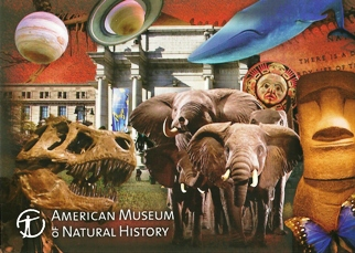 23x Postcard Of American Museum of Natural History