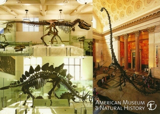 22x Postcard Of Fossil Halls American Museum of Natural History