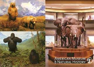 23x Postcard Brown bears,Elephants,Mountain gorillas, American M
