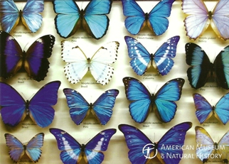 2x The Butterfly Conservatory American Museum of Natural Hist