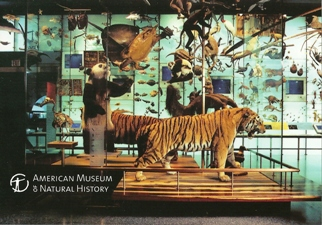 23x Postcard Of AMERICAN MUSEUM OF NATIONAL HISTORY
