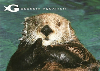 32X Postcard Sea Otter (Enhydra lutris) GEORGIA AQUARIUM