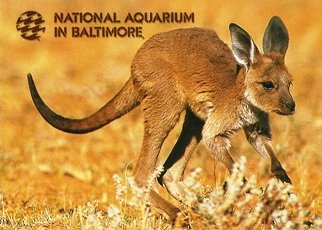 24X Postcard Kangaroo NATIONAL AQUARIUM IN BALTIMORE