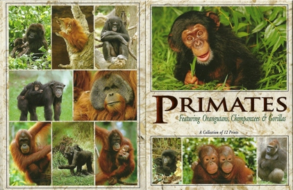 2x PRIMATES, A collection of twelve Prints, Postcard Packet.