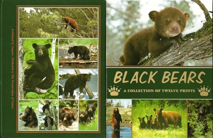 Black Bears A collection of twelve Prints Postcard Packet