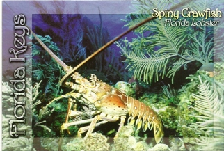 Postcard of Florida Spiny Lobster (With Recipe on Back).