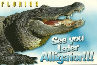 Postcard SEE YOU LATER ALLIGATOR!!! FLORIDA.