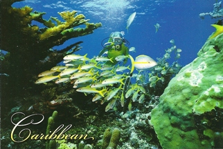 24x Postcard Of Underwater Diver, Caribbean.