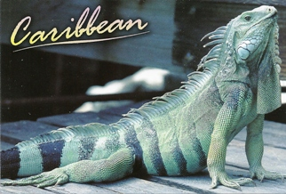 "22x Postcard Of Caribbean Native ""The Iguana\""."