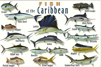 Postcard Of Fish Of The Caribbean.