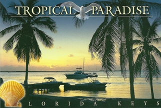 12 (1 Dozen OF The Same Design) Postcard TROPICAL PARADISE ( Wit