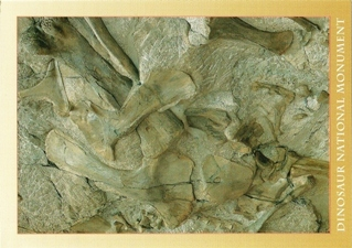 26X Postcard of Fossil Wall Dinosaur National Monument