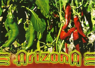 POSTCARD OF ARIZONA Chile peppers