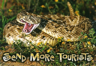 10X POSTCARD SEND MORE TOURISTS RATTLESNAKE